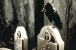 Galería de fotos de El Cuervo